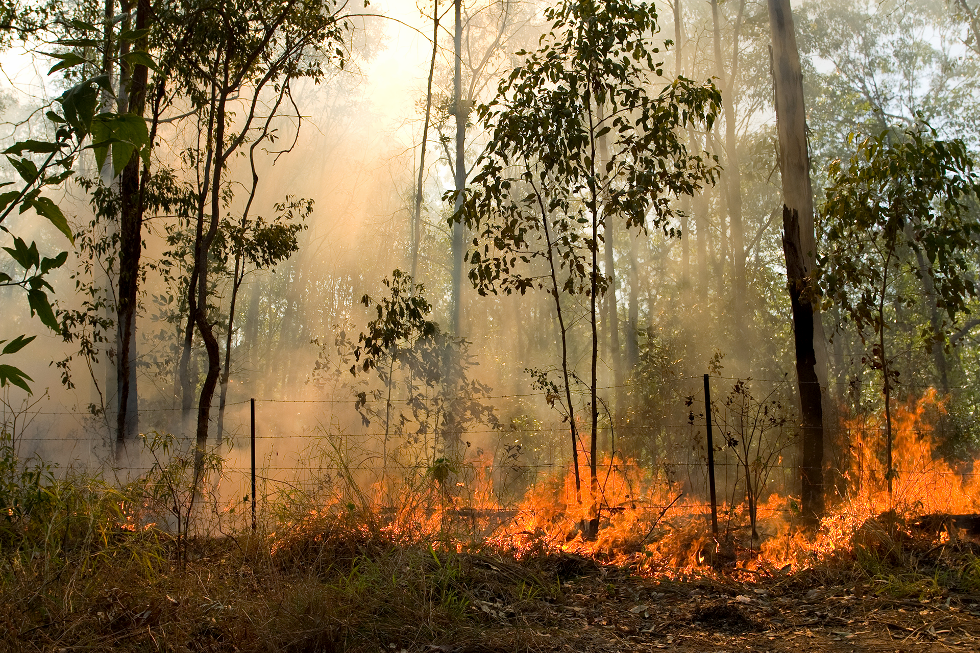 Tasmanian Bush Fire Survival Plan
